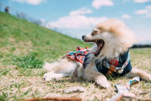 【犬があくびをする理由】眠いわけじゃない!?病気や注意点を徹底解説!