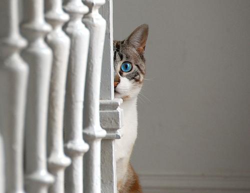 飼い主を覗く猫