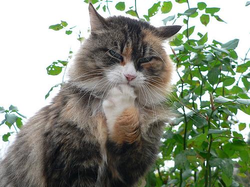 手をなめる猫 猫 吐く 原因 対策