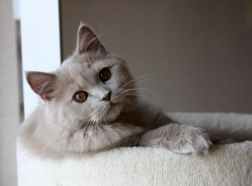 見つめる猫 猫 吐く 原因 対策