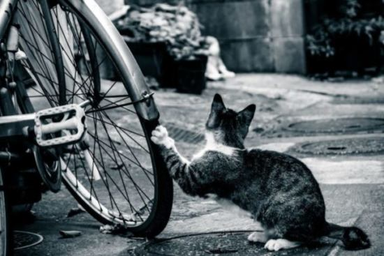 爪とぎの場所を間違える猫