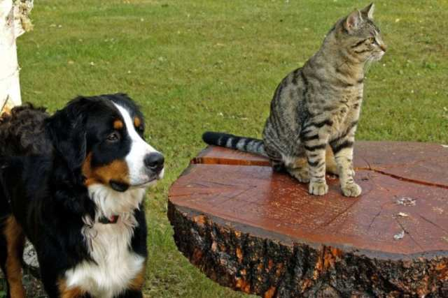 前を見る犬と猫