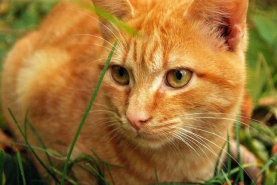猫草を見つめる 猫