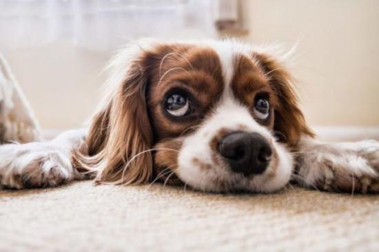 考え事をする犬