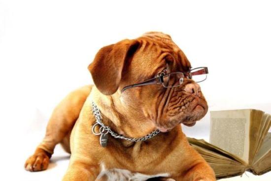 眼鏡をかける犬