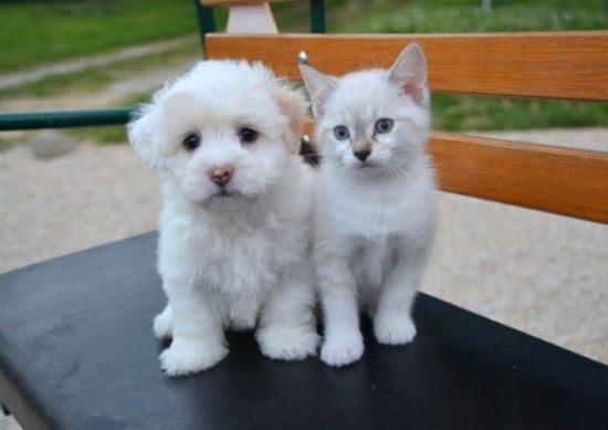 子犬と子猫