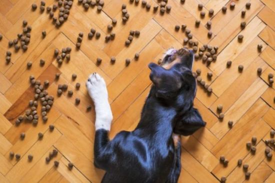 床に落ちた餌を食べる犬