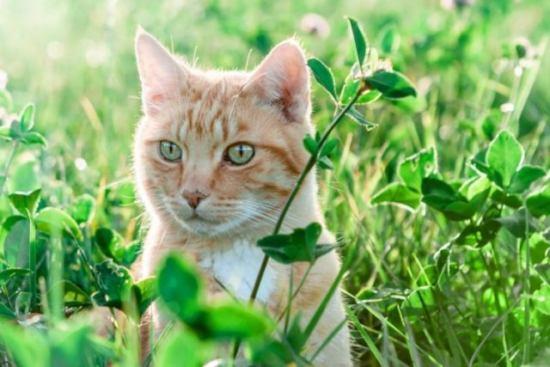 成猫 猫草を見つめる