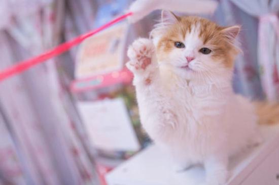 遊ぶ猫 猫 吐く 原因 病気 対策