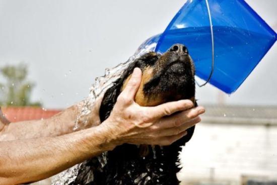 身体を洗う犬