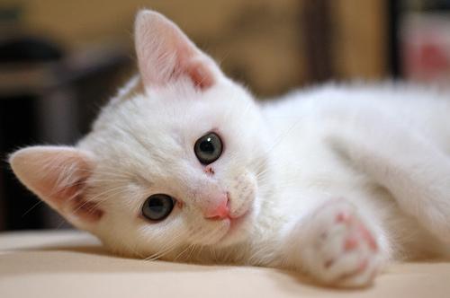 モグニャン 子猫