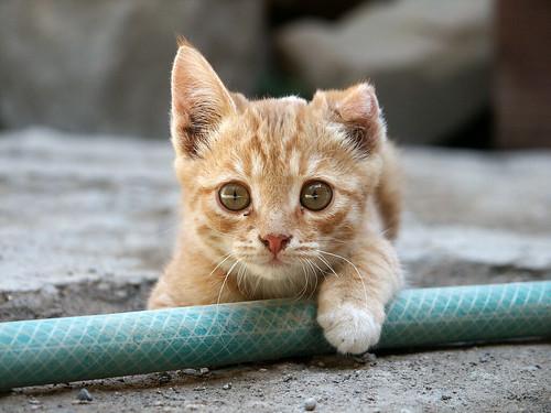 【モグニャンは子猫にNG?】注意点・給餌量や安く購入する方法を解説