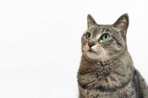 zassyu-mix-cat-pets