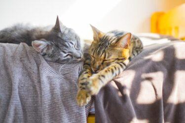 雑種猫(ミックス猫)は飼いやすい?種類・性格や人気トップ5を解説